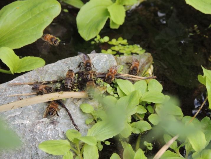 Bijen op bezoek bij Artisklas